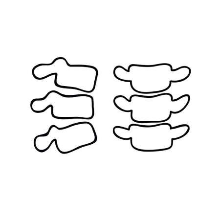 vertebrae doodle icon, vector line illustration Illustration