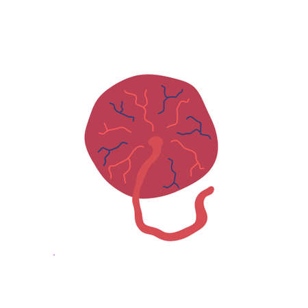 placenta doodle icon, vector color illustration