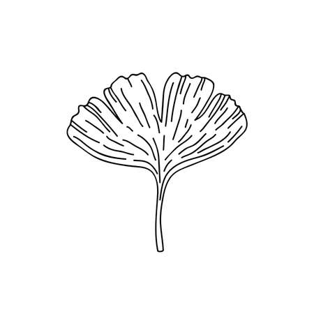gingko leaf doodle icon, vector color illistration
