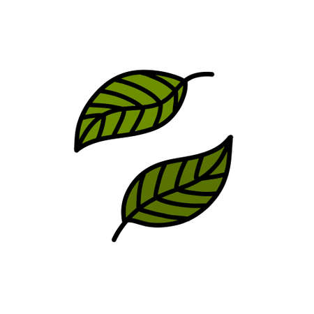 green leaves doodle icon, vector illustration Stok Fotoğraf - 151090056
