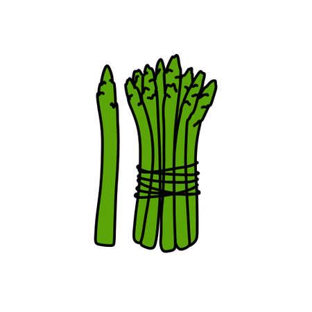 asparagus doodle icon, vector color line illustration