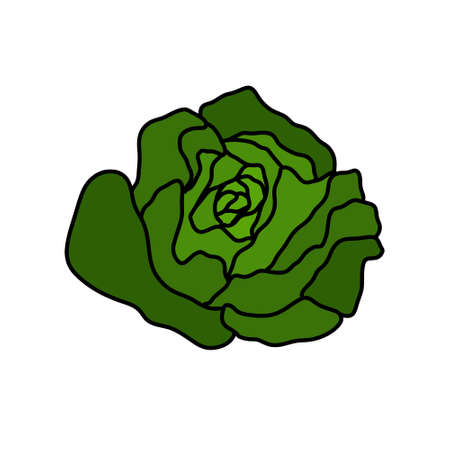 salad doodle icon, vector color line illustration Çizim