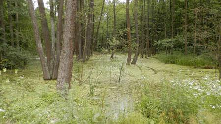 A very beautiful swamp, an excellent fijon for a gadget. Stock fotó