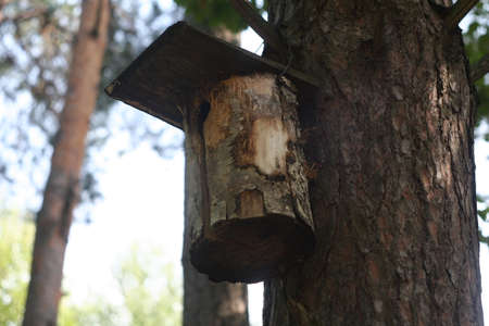 Beautiful birdhouse in a beautiful forest