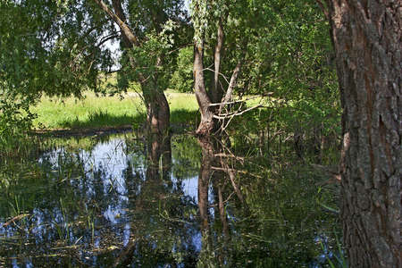 Very beautiful swamp