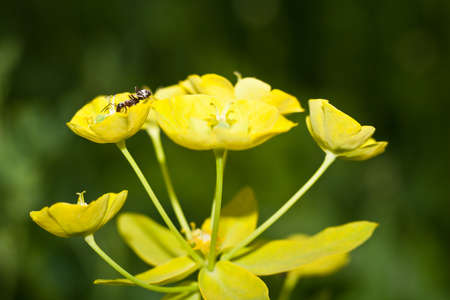 The ant is on a yellow flower. Banco de Imagens
