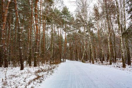 Snowy road in the winter forest. 版權商用圖片