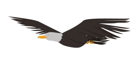rapacious: flying eagle vector Illustration