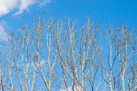 bough: bough with clear blue sky background Stock Photo