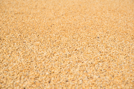 expose: raw coffe beans lay on ground for expose to the wind and sunlight Stock Photo