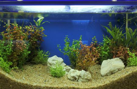 freshwater aquarium plants: aquarium interior