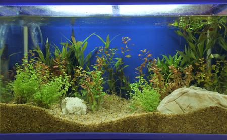 peces de acuario: acuario Foto de archivo