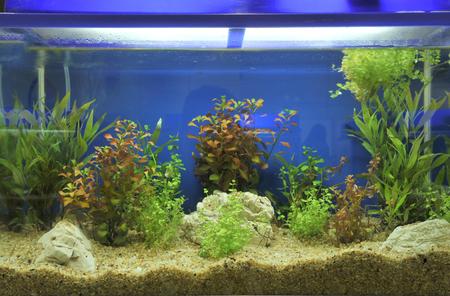 freshwater aquarium plants: aquarium