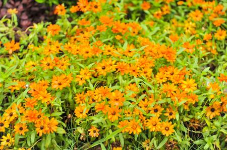 queen anne   s lace: orange flower Stock Photo