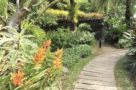 tropical garden: tropical garden