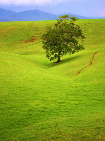 tableland: Lone shade tree for miles on the rolling tableland hills.