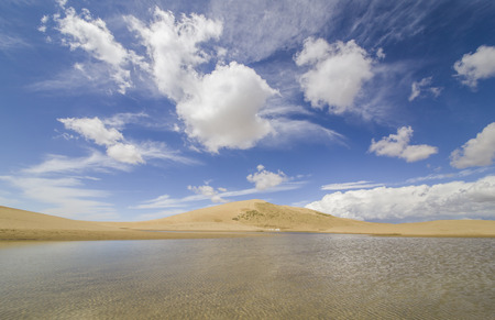 Qinghai Lake Milton Stock Photo
