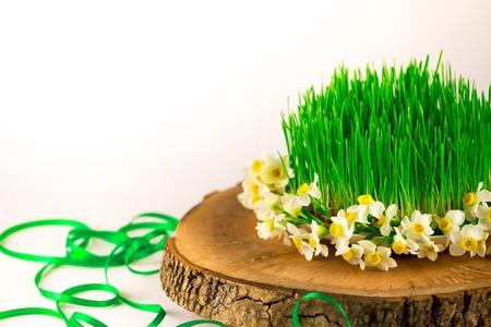 germinación: Green semeni on wooden stump decorated with tiny daffodils Foto de archivo