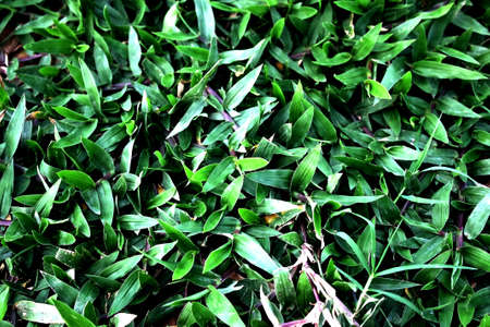 grass Stock Photo - 11840596