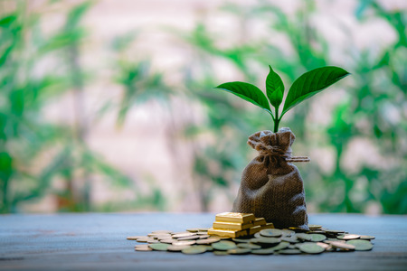 Plant Growing In Savings Coins - Money, Financial, Business Growth concept.