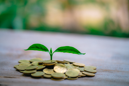 Cropping on coins - investment ideas for growth