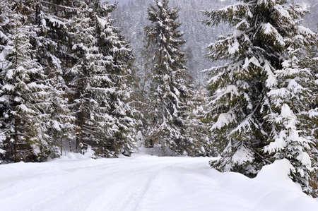 carpathians: Carpathians ,