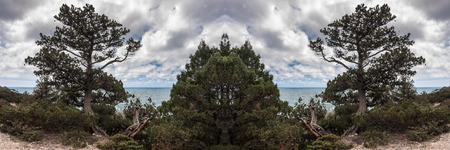 strut: Crimean peninsula, Ukraine, Black Sea coast, on the shore from the rock tree grows on the sea background Stock Photo