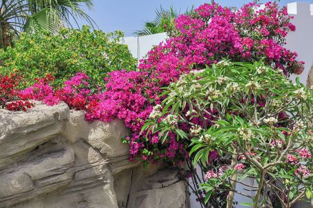 el sheikh: The resort area of Sharm El Sheikh palmlined avenue exotic plants large swimming pools beaches coastal cafes