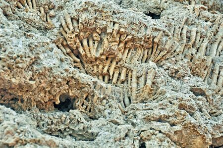 porosity: Fossilized coral deposits after the tide in the Red Sea Stock Photo
