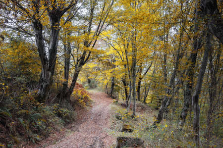forest trail: Forest trail in autumn forest