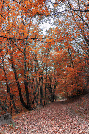 forest trail: Autumn forest. Forest trail in autumn forest