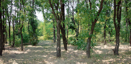 forest trail: Deciduous forest. Forest trail in the forest