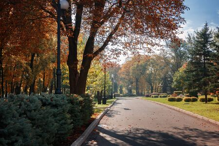 walking paths: Park alley in autumn city park