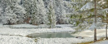 Winter forest in the Carpathians, Lake Vita, Mizhhiria, western Ukraine