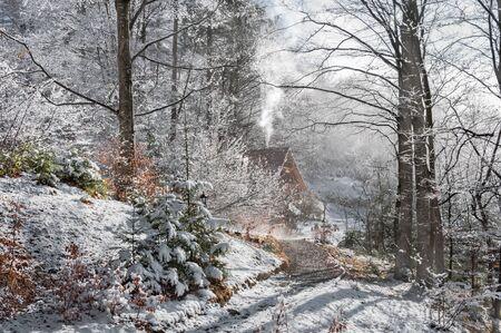 Winter forest in the Carpathians. Western Ukraine