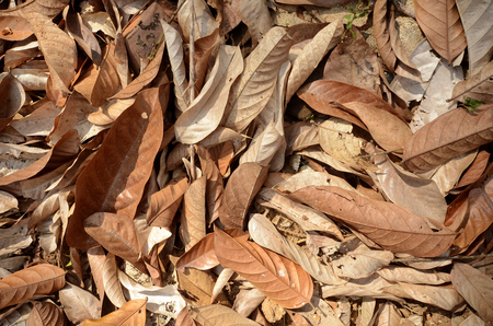 dry leaves, Brown and yellow dried leaves