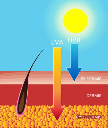 Skin compare, Protect both UVA and UVB