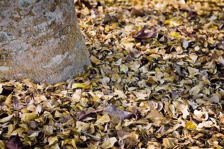pile of leaves: pile of leaves