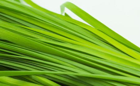 chives: fresh green Garlic chives vegetable, white Garlic chives Stock Photo