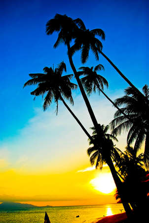 Landscape of the silhouette of coconut trees on beach at sunrise photo