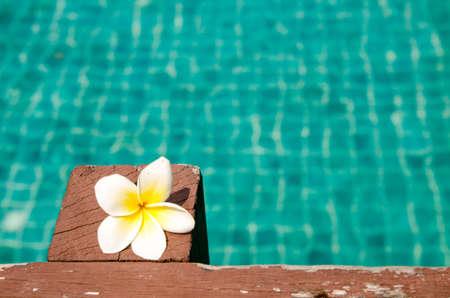 Mooie Frangipani op hout in het zwembad