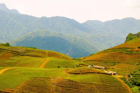 Terraced rice fields in Vietnam  Southeast asia beauty landscapes  photo