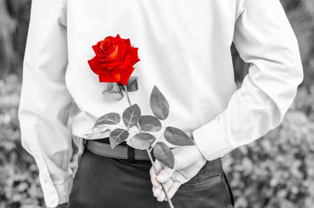 intrigued: Photo of man holding a red rose behind his back  for his woman Stock Photo