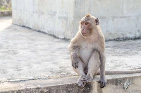 Thai monkey (Macaque) in public park ,selective focus point