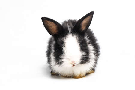 White and black rabbit or bunny animal small bunnies easter is sitting and funny happy animal have white isolated background Imagens