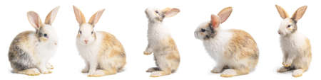 Group of Little brown and white rabbits in many actions on white background