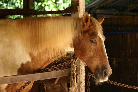 Konie w stajni Zdjęcie Seryjne - 337032
