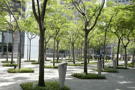 urban jungle: Filas de �rboles en la selva urbana que hace un parque artificial