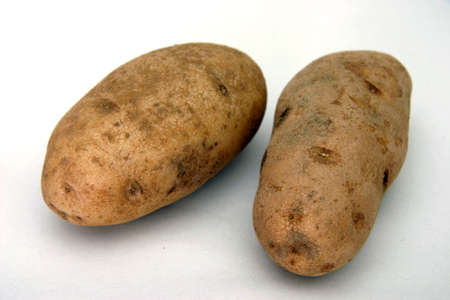 farmed: Two potatoes Stock Photo