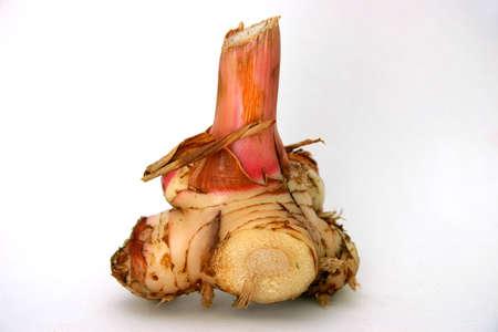 pflanze wurzel: Plant Root-Ingwer in der Familie